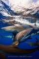 Silky Sharks - Gardens of the Queen