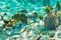 Palancar Reef  Cozumel