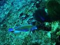 Electric Fish!
