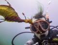 Seadragon Selfie