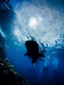 She keeps on passin' me by... Whale Shark - Rhincodon typus. Sail Rock, Thailand-EM5-Panasonic 8mm-iso200-f20-1/125