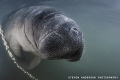 My favorite winter time dive at Crystal River always is a happy dive with the smiles of the manatees.