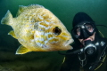 diver and pumpkinseed