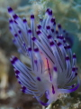Nudimania
