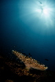 S U N L I G H T Table coral  Acropora  Perhentian Island  Malaysia. April 2015
