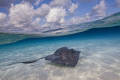 Stingray cruises the sandbar. Stingray City.