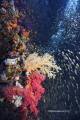 Turbion. Sharm El Sheik Nikon df800E , 10,5 mm , two strobo sea and sea 120YS