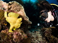 Jade & the Frogfish