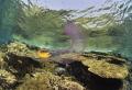 Jelly fisf and friend Nikon D800E  17 35mm Nikon Two strobo sea and sea 120YS