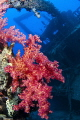 Corals on the Ghiannis D