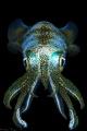 filipino squid