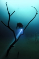 Diver explores Angelita Cenote.