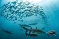 Nature s Choreography