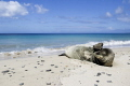 Need pair of sunglasses..
