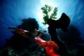 Model: Shammadina, Canon 5D, Sigma 12 mm, Hugyfot, Sataya Reef..... Mermaids still alive :-)