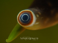 Eye of the Conch
