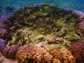 Kahaluu Bay  Kona  Hawaii