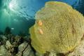 sentier sous marin du Cap Salomon  Martinique