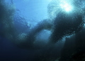 Sardines. Moal Boal . Philippines. Nikon D800E   Seacam housing . No strobe