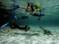Funny scene  4 snorkeler meeting a female sea lion.