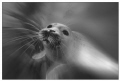 Playing seal