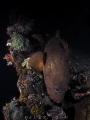 This is Night Dive at Liberty Wreck, Tulamben, Bali, Indonesia. Its Grouper Following me during the dive and come closer to me. That's a awesome night wide angle shot.