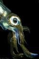 filipino squid #4