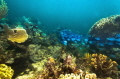 La Poza Reef, Xcalak, Quintana Roo