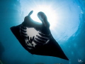 Bat of the sea