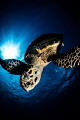 Dive 