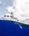 An oceanic white tip shark's dorsal fin breaks the surface near a boat in an split level shot at Cat Island in the Bahamas