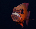 Feeling broody...