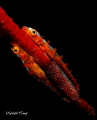 Gobies and eggs