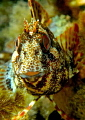 happy blenny