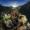 shallow life (Thau lagoon, France)