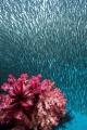 Rush Hour — Subal underwater housing, Canon 1Dx, Canon 8-15mm fisheye @ 15mm, f9, 1/80, ISO 320, Inon Z240 strobe.