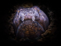 snakenose