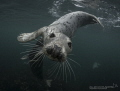 Playful seals in Farne Islands!
