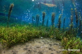 Magic underwater paradise.