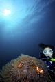 Seow & Anemonefish