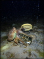 Running octopus