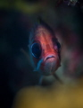 This cute squirrelfish was peeking through a hole in the coral and I was there ready to capture his surprise moment!