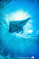 Manta Ray and SunRays