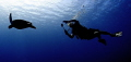 Turtle and Diver Silhouette