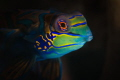 Mandarinfish - the Beauty Queen of the Sea!!! One of the most colorful fish in the sea with striking beauty.