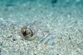 Dragonya fish