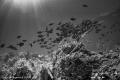Lassisters Reef
