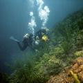 Retro diving.