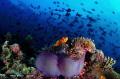 Maldivian reef life