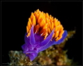 Title: Spanish Shawl